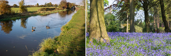Canal Bluebells